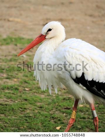 lovely stork in the grass #1055748848