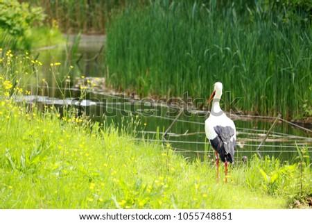 lovely stork in the grass #1055748851