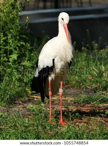 lovely stork in the grass #1055748854