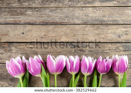 Lovely tulip flowers on wooden backdrop, holiday postcard