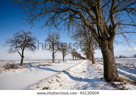 Lovely winter landcape - alley covered with fresh snow on a sunny winter day