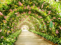 Lovers walk in the flower tunnel park.