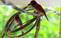 Loving birds. Sharing love within themselves forgetting the world.