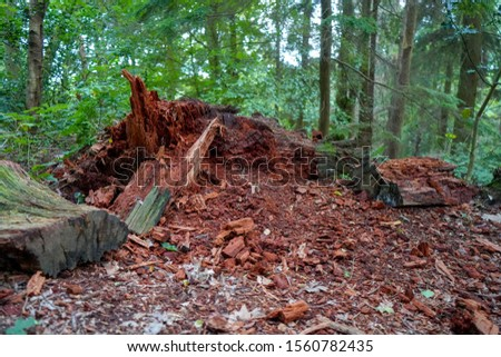 Low angle angle view of a rotting tree tree stump