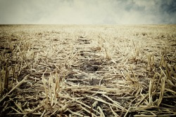 Low angle of dry grass. Global warming concept.