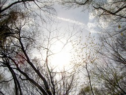low angle of sun peeking through tree branches