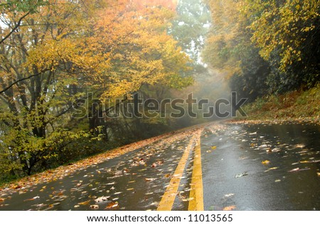 Low angle shot of Autumn on the Blue Ridge Parkway.  Pavement is wet and covered with foliage.