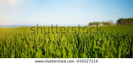 low angle shot of lush green field under clear blue sky with ocean and trees in shallow background #650227216