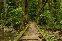 Low Angle View Of A Wood Bridge In The Ecuadorian Jungle