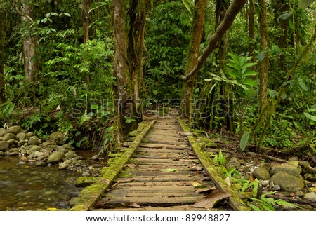 LOW ANGLE VIEW OF A WOODEN BRIDGE IN THE ECUADORIAN JUNGLE