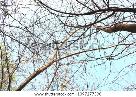 low angle view of branches against sky #1097277590