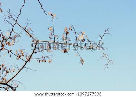 low angle view of branches against sky #1097277593
