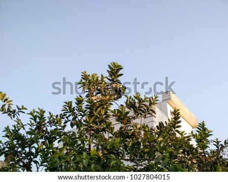 low angle view of built structure covered with tree leaves against clear sky #1027804015