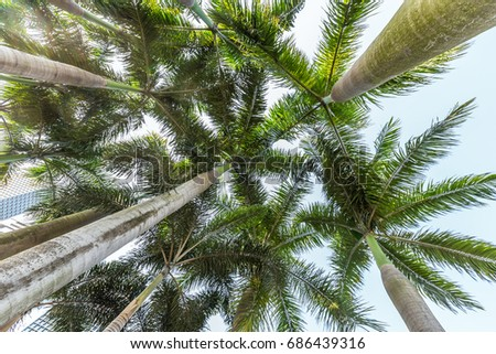 Low Angle View Of Coconut Palm Tree against sky. #686439316