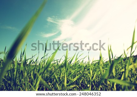 low angle view of fresh grass against blue sky with clouds. freedom and renewal concept  #248046352