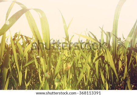 low angle view of fresh grass against blue sky with clouds. retro filtered  #368113391