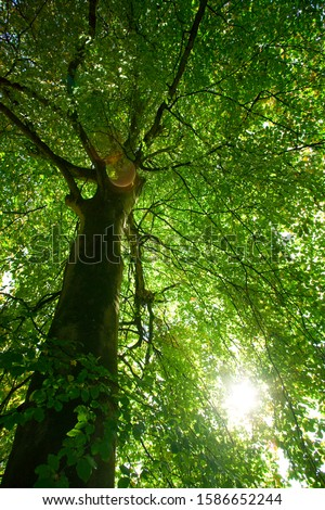 Low angle view of green leaves and sun