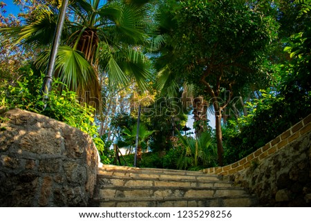 low angle view of of tropical trees and palms in park against blue sky, Antalia Turkey #1235298256