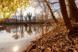 Low angle view of Potomac River running between Maryland and Virginia. This autumn landscape features reflection of trees and sun in the calm water. Fallen leaves cover the muddy soil.