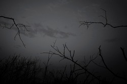Low angle view of silhouette dead tree against dark dramatic sky. Background for lonely, sad, hopeless, death, and despair. Black leafless trees with branches in the forest. Sad nature for sad emotion