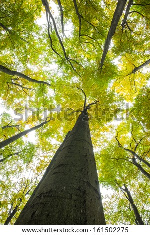 Low angle view of tall trees against the sky #161502275