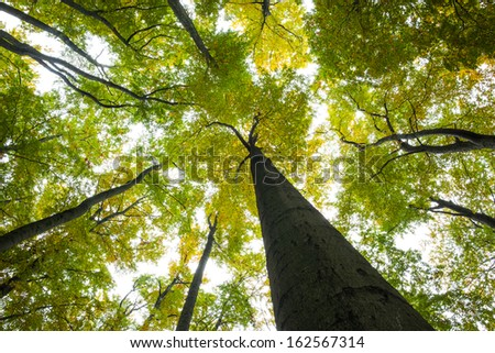 Low angle view of tall trees against the sky #162567314