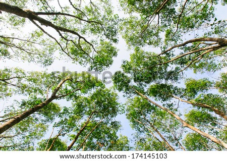 Low angle view of the forest to the sky