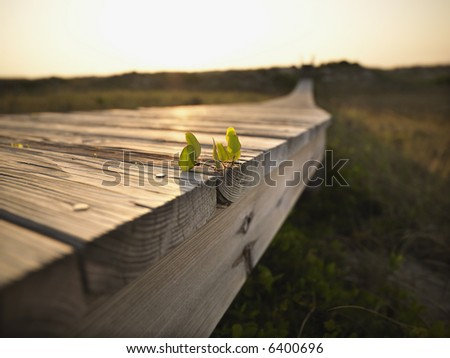 Low angle view of wooden boardwalk with plant growing on it at  Bald Head Island, North Carolina.