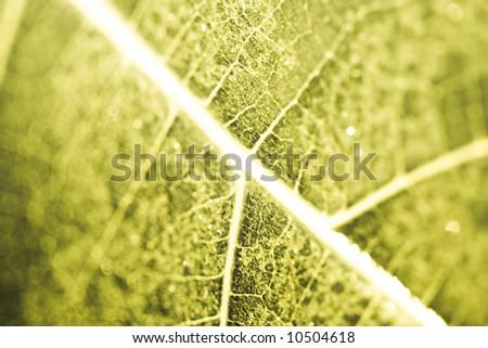 Low aperture shot - green grunge leaf details