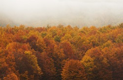 Low clouds cross over the tops of trees in autumn