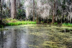 Low country coastal swamp and wetlands with live oak trees and Spanish moss near Charleston, South Carolina