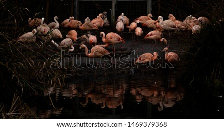 Low key group of flamingos