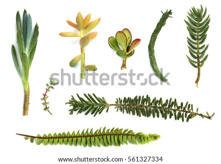 Shutterstock puzzlepix for Drought resistant grass crossword clue