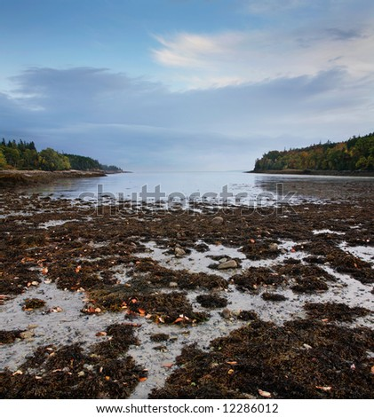 Low Tide, Acadia National Park, Maine