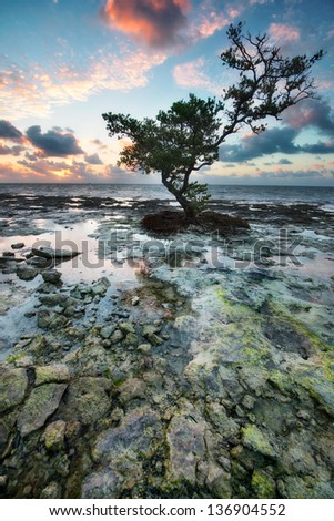 Low tide at the Florida Keys Islands. View from West Summerland Key, USA.