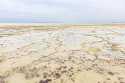 Low tide near Zanzibar coast. Coastline of Indian ocean. Low tide with reef and cliff. Empty seashore. Tropical nature. Summer vacations in Africa. Walking on low tide. Idyllic bay. Exotic beach.