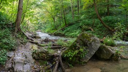 Lower Decew Conservation Area Saint Catharines featuring hiking trail up river stream with river rocks, tree stumps, rushing water and green forest