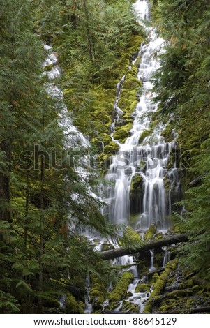 Lower Proxy Falls, waterfall in the forest in Oregon.