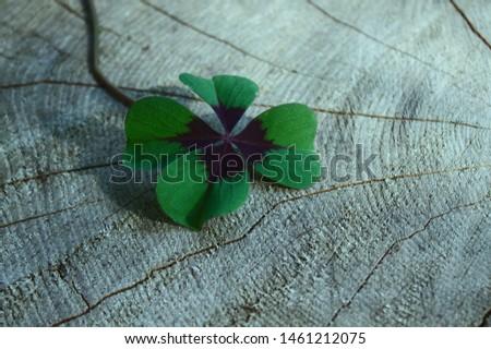 lucky clover on a tree trunk #1461212075