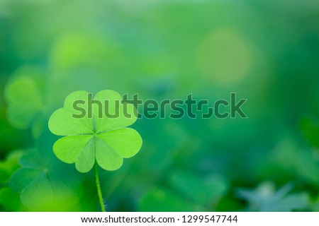 Lucky Four Leaf Clover for St. Patricks Day
