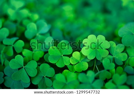 Lucky Irish Four Leaf Clover in the Field for St. Patricks Day  #1299547732