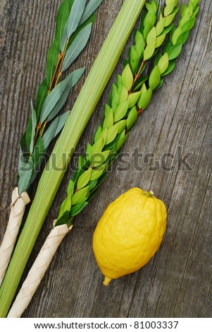 Lulav and Etrog, symbols of the Jewish festival of Sukkot