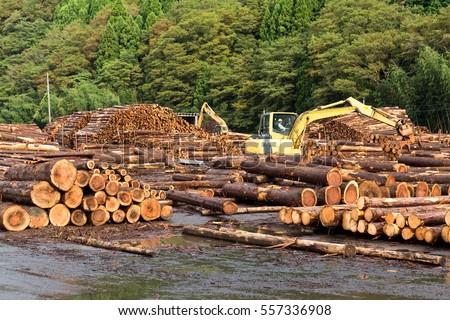 Lumber yard with stacked lumber