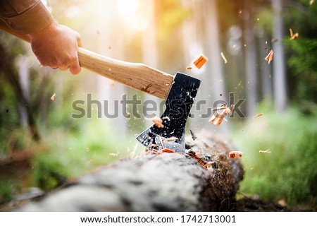 Photo of  Lumberjack in checkered shirt chops tree in deep forest with sharp ax, Detail of axe, wood chips fly around.