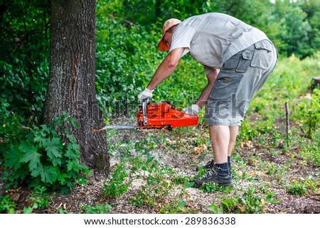Lumberjack logger worker cutting firewood timber tree in forest with chainsaw