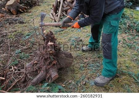 lumberjack prepares rootstock for evacuation - logging works #260182931