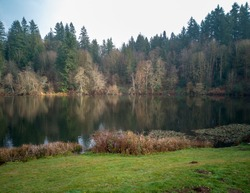 Luminous trees reflecting in the water with lily pads and hundreds of ducks in the far background in the fall time at Lake Rasmussen Park in Duvall Washington State