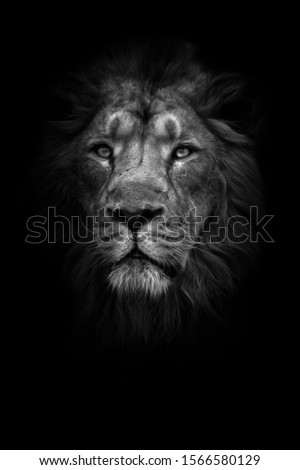 lunar beast (ashen). Portrait full face. A powerful male lion with a chic mane impressively lies. night darkness, isolated black background. #1566580129