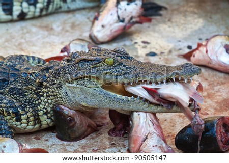 Lunch with Crocodile