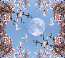 lune et beau paysage de ciel flowers
